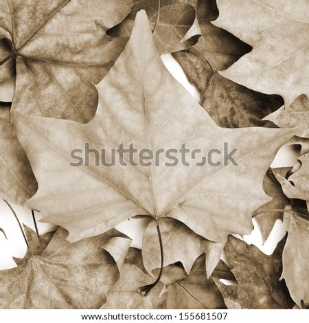 picture of a pile of dried leaves in autumn - stock photo