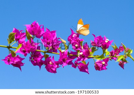 Picture of butterfly feeding from red flowers. - stock photo