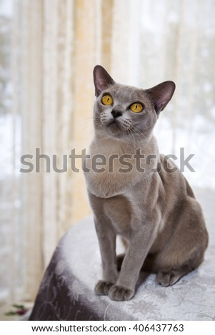 Picture of cat sitting on the table - stock photo