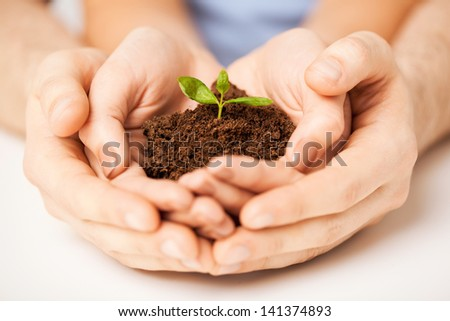picture of couple hands with green sprout and ground - stock photo