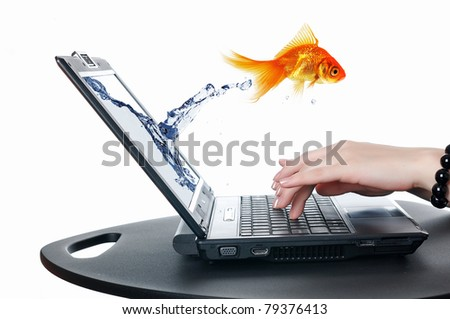 picture of gold fish and laptop computer - stock photo