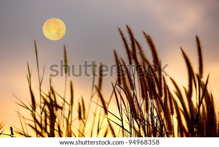 Picture of grass and moon on the sky silhouette. - stock photo