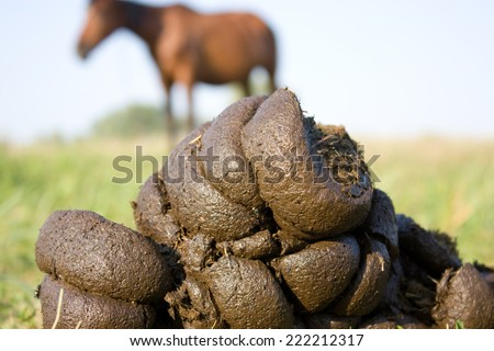 picture of horse faeces from a horse in the background - stock photo