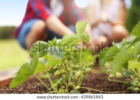 Picture of young couple working in the garden - stock photo