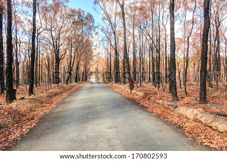 picture taken shortly after bushfires Nov 2013 Springwood australia - stock photo