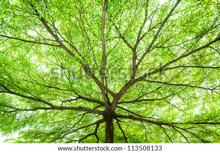 picture under the tree with spread branch and green leaves - stock photo