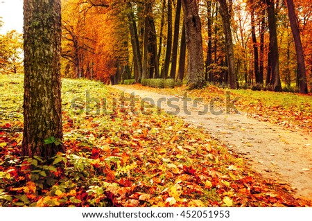Picturesque autumn landscape view of deserted autumn park with fallen autumn leaves, soft filter applied -autumn landscape in cloudy weather with yellowed autumn trees along lonely autumn alley - stock photo