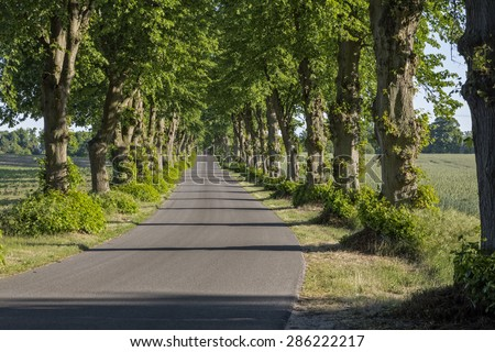 Picturesque lime tree alley in East Germany - stock photo