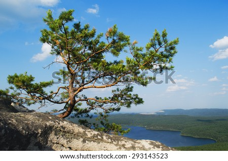 Picturesque pine at top of mountain Arakul. lake Arakul in the distance. Russia. Chelyabinsk region - stock photo