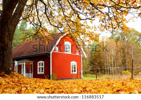 Picturesque rural view of a traditional red painted Swedish timber house standing in a carpet of vibrant yellow autumn leaves - stock photo