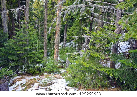 pie forest pretty - stock photo