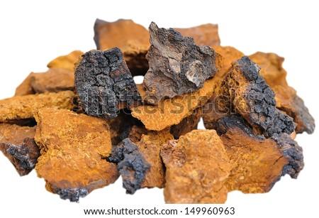 Pieces of Inonotus obliquus. Herbal medicine traditional medicine - stock photo