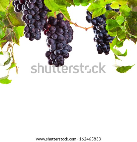 Pieces of red wine grapes on white background - stock photo
