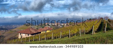 Piedmont Vineyards in the fall after harvest - stock photo