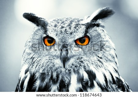 Piercing owl Eyes - stock photo