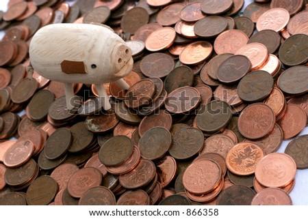 pig with money - stock photo