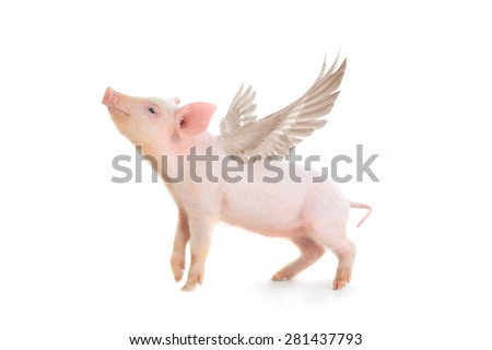 pig with wings on a white background. studio - stock photo