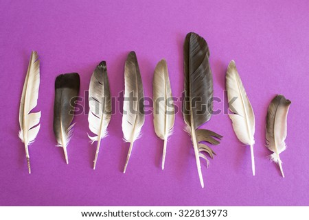 Pigeon feathers on a purple background. - stock photo