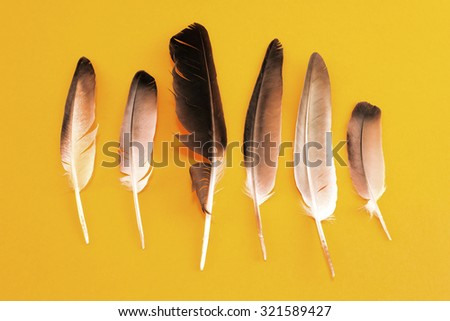 Pigeon feathers on a yellow background. - stock photo