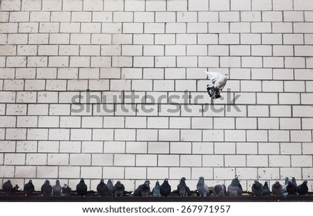 pigeon flying, freedom revolution concept creative wallpaper - stock photo