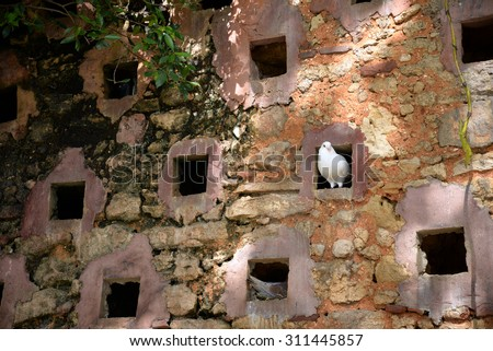 pigeon in ancient stone wall, Puerto Rico - stock photo