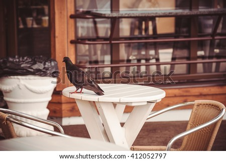 Pigeon on a little table in street cafe - stock photo