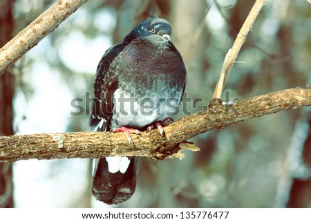 Pigeon on a Tree - stock photo