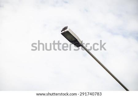Pigeon on flashlight - stock photo