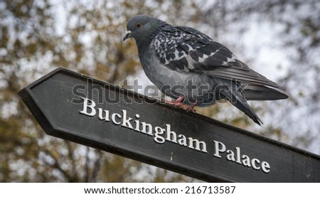 Pigeon on Signpost - stock photo