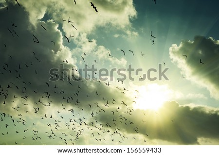 pigeon silhouette against a beautiful sunrise - stock photo