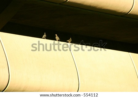Pigeons at the Seattle airport - stock photo