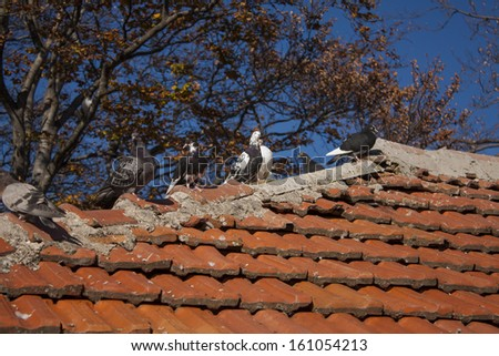 Pigeons on the roof - stock photo