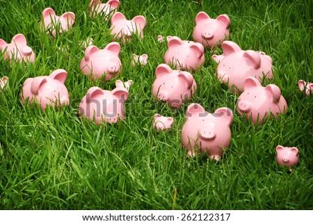 Piggy Banks in grassy field - stock photo