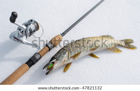Pike on snow with spinning and lure in mouth - stock photo