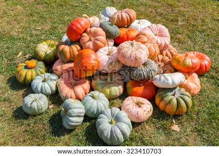 Pile of colorful multi-colored pumpkins in a field. - stock photo