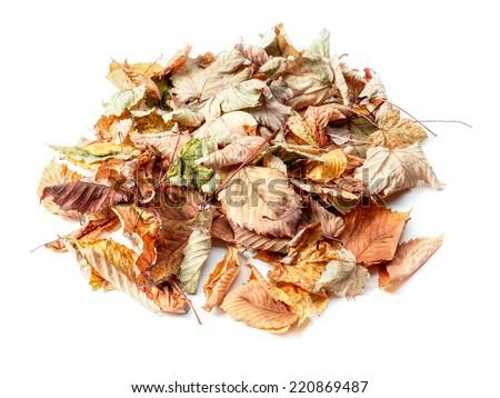 Pile of dead fall leaves shot on white - stock photo