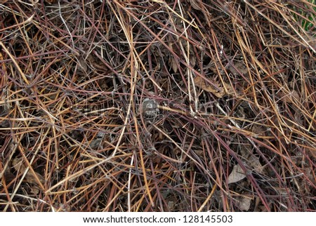 Pile of dry leaves and stems just after snow melt away in early spring. - stock photo