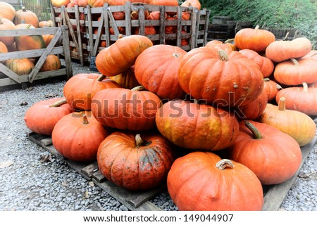 Pile of fresh pumpkins for sale - stock photo