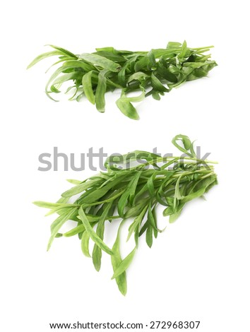 Pile of green leaves of the Tarragon Artemisia dracunculus perennial aromatic culinary herb isolated over the white background, set of two foreshortenings - stock photo