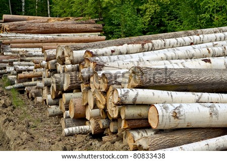 Pile of harvested wood of birch, pine and aspen against a background of green forest - stock photo
