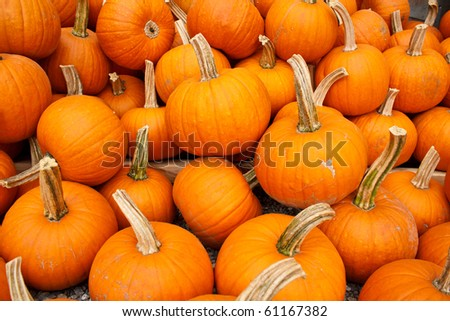 pile of organic pumpkins ready for sale - stock photo