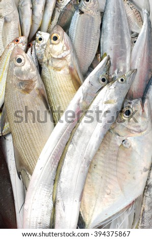 Pile of pacific fresh fish  - stock photo