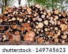 Pile of raw pine wood logs in the forest - stock photo