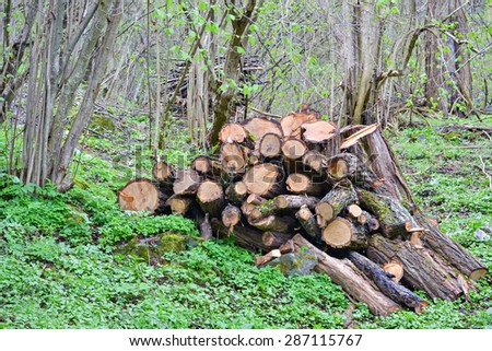 Pile of sawed wooden logs in the forest and green grass - stock photo