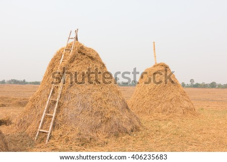 Pile of straw by product from rice field after collecting season - stock photo