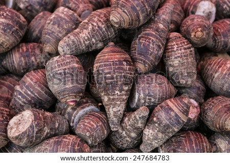 pile of taro for retail sale in local market. background of fresh taro. - stock photo