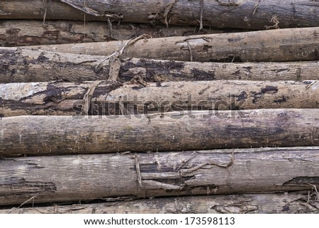 Pile of Timber Logs in rainforest - stock photo