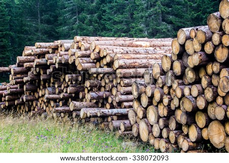 pile of tree trunks in the forest - stock photo