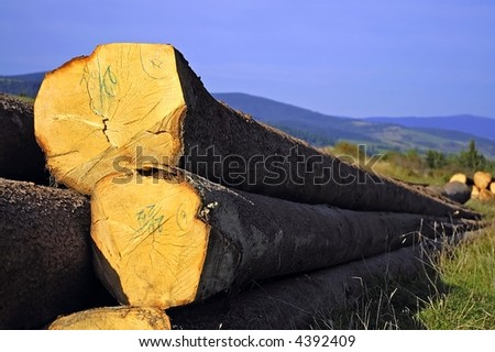 pile of wood in the nature, storage - stock photo