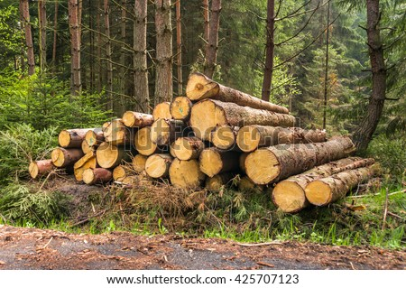 Pile of wood logs on the edge of the forest - stock photo